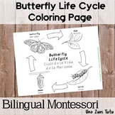 Bilingual Butterfly Life Cycle Coloring Page English-Spanish