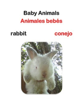 Baby Animals Picture Booklet - Bilingual English/Spanish