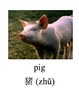 Bilingual Animals (Farm Animals) English and Simplified Ch