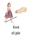 Bilingual Parts of the Body English and Spanish PDF