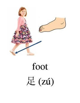 Bilingual Parts of the Body English and and Simplified Chinese PDF