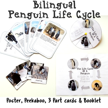 Bilingual Penguin Life Cycle With Real Photos Preschool Science Montessorilove