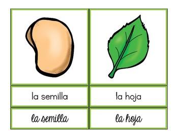 Bilingual Plant Vocabulary / Vocabulario de las plantas paquete bilingüe