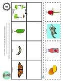 Bilingual Rhyming Activity: El ciclo de vida de una mariposa