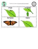 Bilingual Sequencing Cards: El ciclo de vida de una mariposa