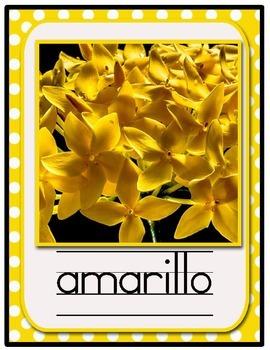 Bilingual, Spanish & English Color Poster Set with Polka Dots