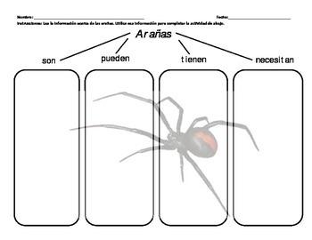 Bilingual Spiders Graphic Organizer