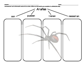 Bilingual Spiders Graphic Organizer