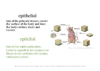 Bilingual Vocabulary Image Set (Spanish): HS Anatomy, Histology