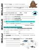 bill nye the science guy marine mammals animals video worksheet. Black Bedroom Furniture Sets. Home Design Ideas