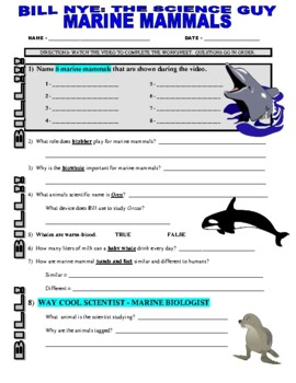 Food Chain Food Web Worksheet Free Worksheets Library | Download ...