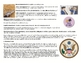 Bill of Rights PowerPoint-Notes-Timeline Lesson Plan