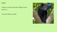 Binturong - Animal powerpoint information facts history endangered pictures
