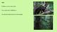 Binturong - Animal powerpoint information facts history en
