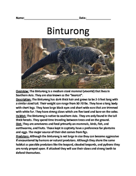Binturong - endangered animal article information facts questions vocabulary