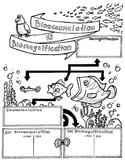 Bioaccumulation vs. Biomagnification Sketch Notes