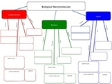 Biochemistry (Biological Macromolecules) Graphic Organizer