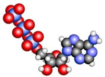 Biochemistry Images