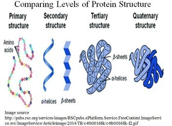 Biochemistry Learning Packet for Advanced and AP Biology