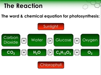 Biochemistry: Macromolecules, Photosynthesis, Respiration and Fermentation