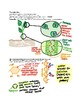Biochemistry: Properties of Water and Transpiration notes / study guide