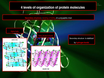 Biochemistry - Proteins and Enzymes