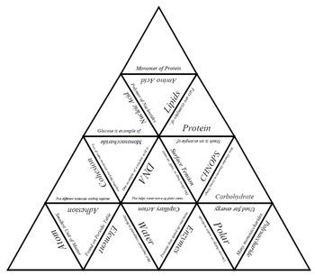 Biochemistry Vocabulary Tarsia Puzzle