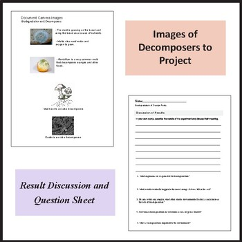 Biodegradation, Decomposers, and Decay of Orange Peels