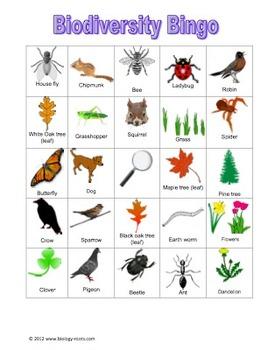 Biodiversity Bingo- City Living Edition