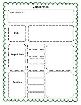 Biodiversity - Classifying Animals Graphic Organizer - Ver
