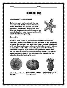 Biodiversity: Echinoderms Overview Notes and Crossword Puzzle