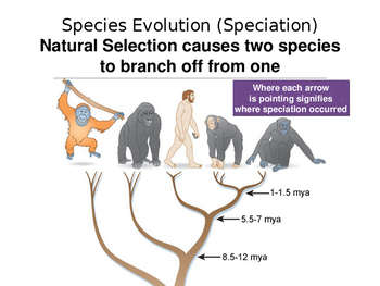 Biodiversity, Speciation, and Human Activities