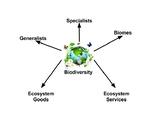 Biodiversity Word Web