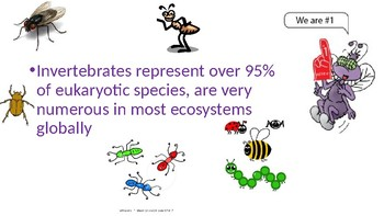Biodiversity of Insects Power Point!  *Editable