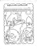 Biogeochemical Cycle Worksheet