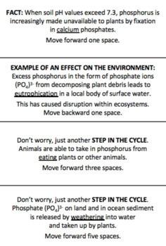 Biogeochemical Cycles Board Games/Notes