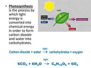 Biogeochemical Cycles: Carbon Cycle