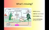 Biogeochemical Cycles DRILL_Editable Version