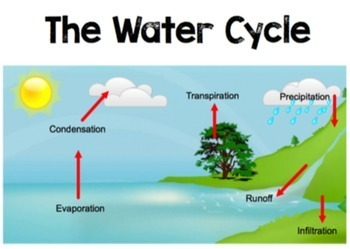 Biogeochemical Cycles Poster Pack