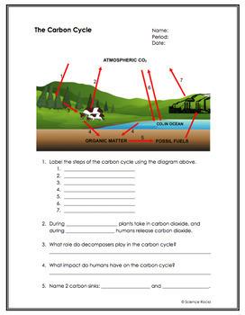 Biogeochemical Cycles Nitrogen Cycle Worksheet Answers ...