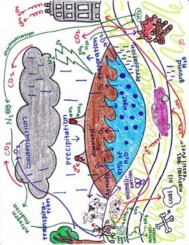 Biogeochemical cycles Notebook Insert (lecture aid)