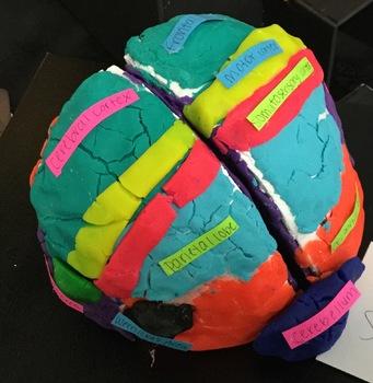 Biological Amusement Park and 3D Brain Project