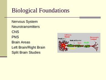 Biological Bases of Psychology (General or Introductory Psychology)