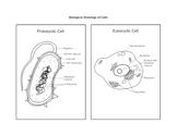 Biological Drawing of Prokaryotic & Eukaryotic Cells