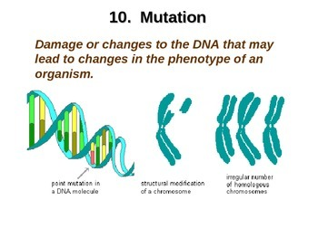 Biological Evolution Powerpoint