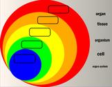 Biological Levels of Organization- Interactive Flipchart
