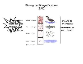 Biological Magnification Handout/Notes