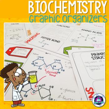 Biological Molecules Graphic Organizers