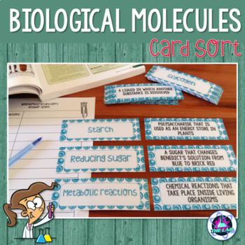 Biological Molecules Vocabulary Card Sort