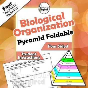 Biological Organization Pyramid 3-D Foldable - 4 Versions, Collapses to Store